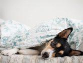 15 Nejvýhodnejší Fotografií z Postele Pro Psy