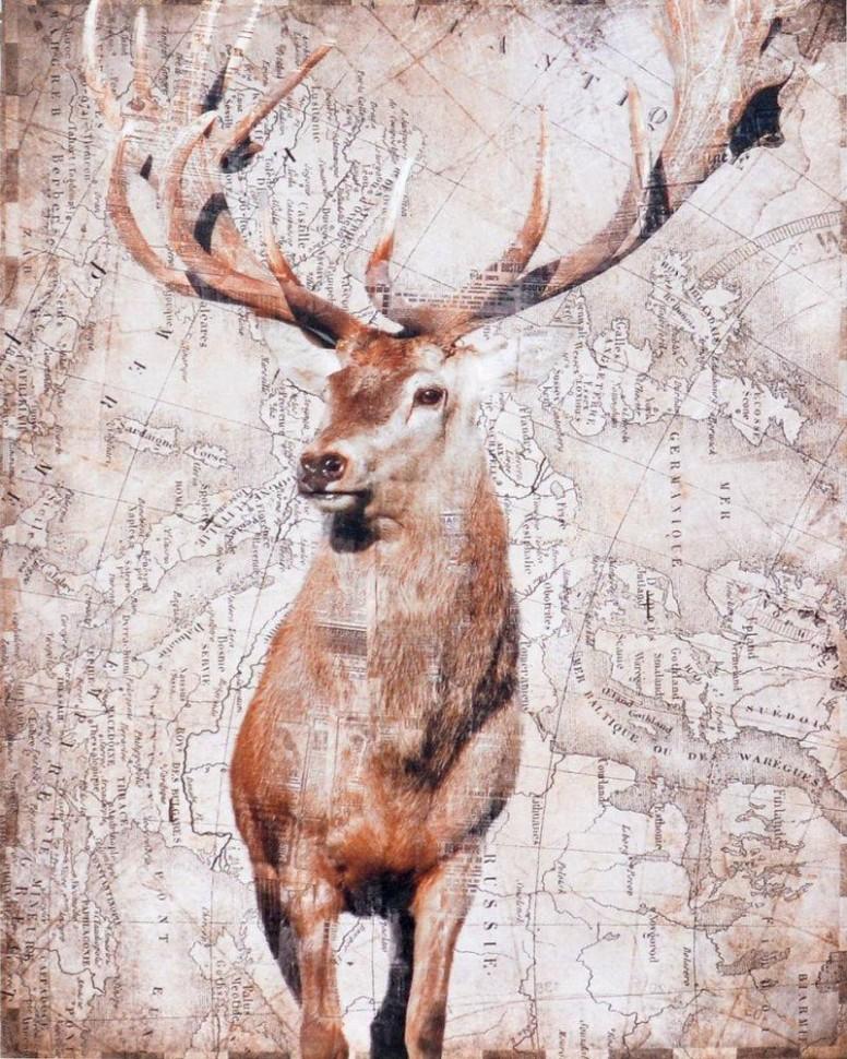 Obraz na plátně - Jelen, 51x51 cm | Sousede