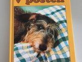 44 Nejlepší Obrázky z Postele Pro Psy