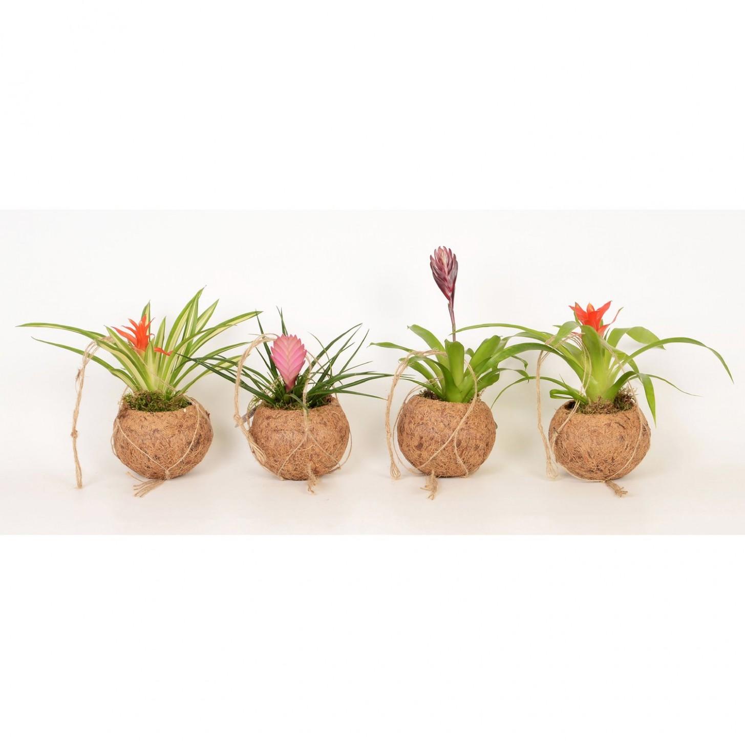 Deset spolehlivých zdrojů, které se dozvíte o Závesném Kvetinác