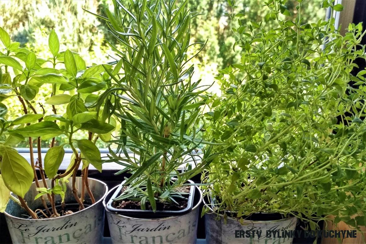 Čerstvé bylinky na Štedrý deň - domáce