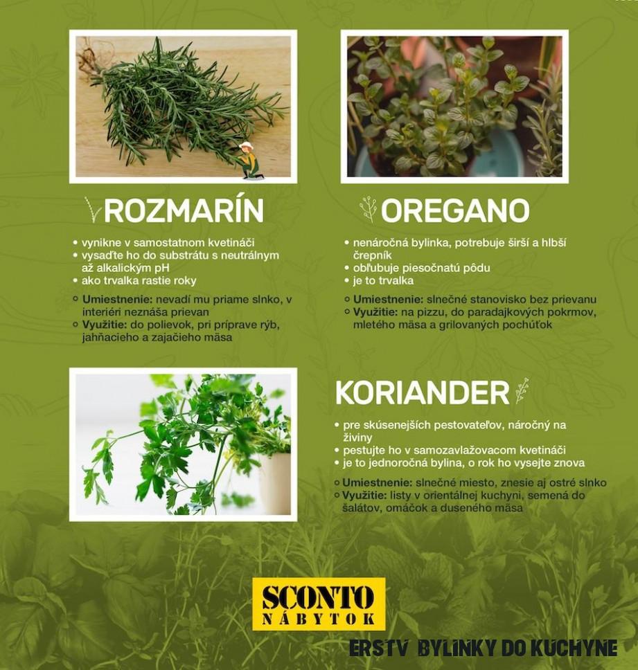 Pestujeme bylinky v kuchyni – týchto 17 u vás nesmie chýbať  Sconto